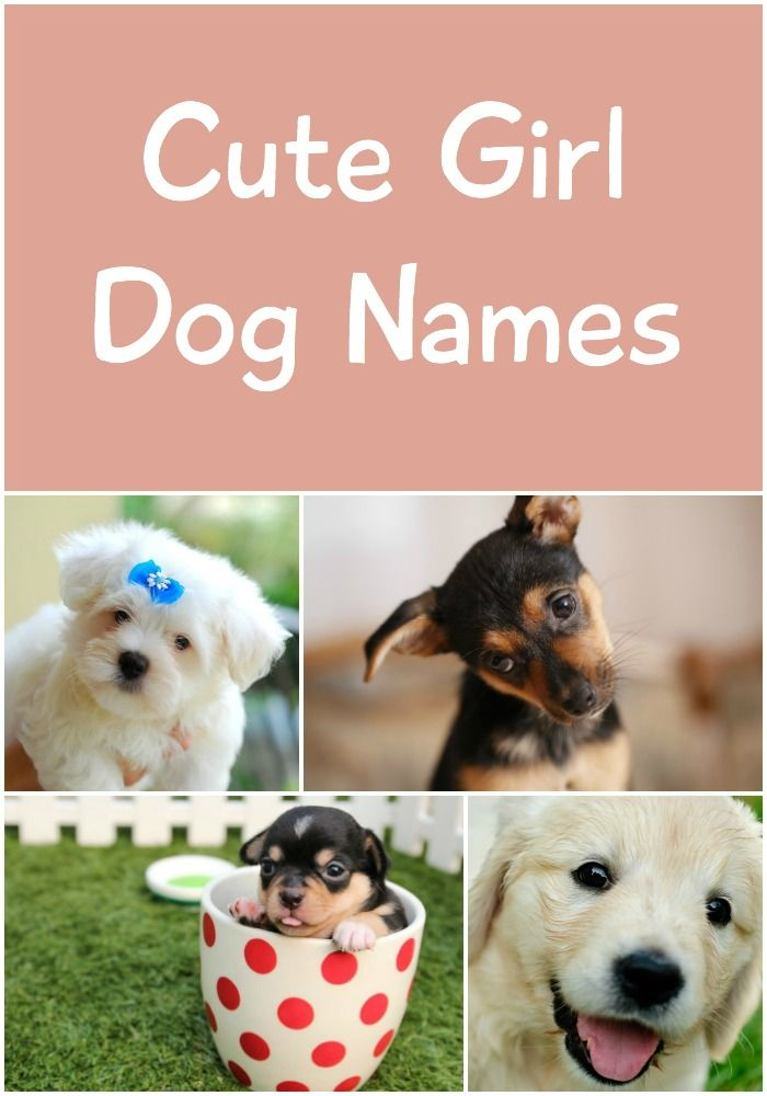 Super sweet and adorably cute girl dog names. You're guaranteed to find a name you love!