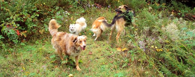 dogs psychology and communication Careers in animal behavior university programs  behavior is administered by the departments of biology and psychology  behavior and communication in dogs,.