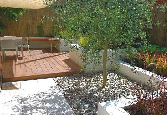 Olive trees set with pebbles on weed free membrane, white rendered walls with raised planting