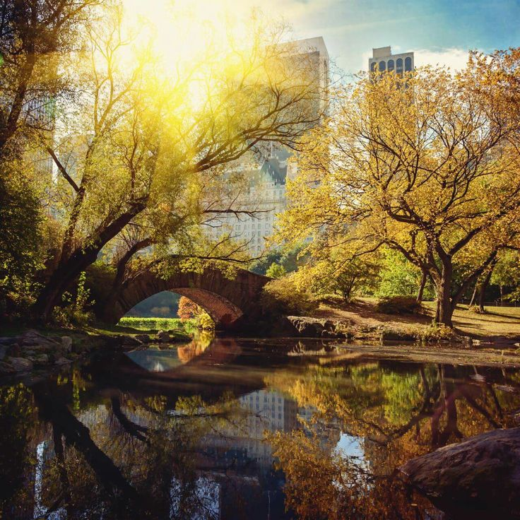 Autumn light in Central Park NYC