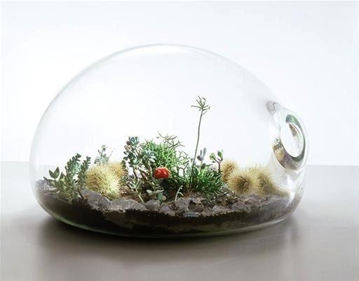 1000 bilder zu terrarium flaschengarten auf pinterest g rten gl ser und pflanzenk bel. Black Bedroom Furniture Sets. Home Design Ideas