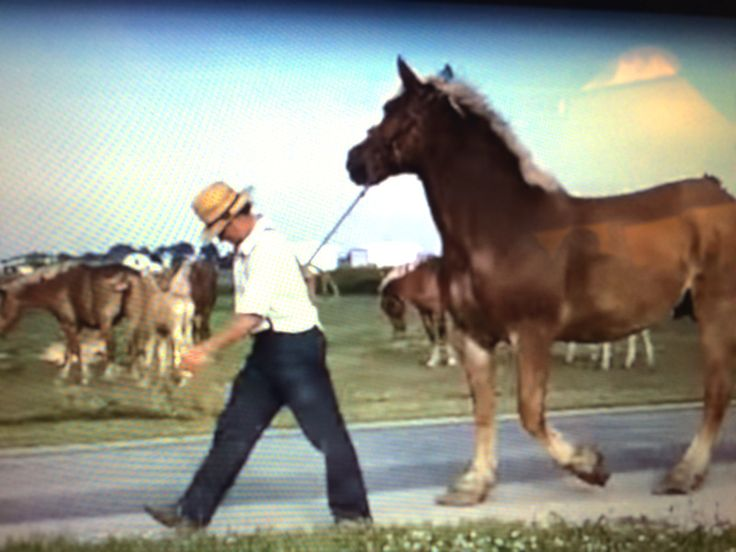 AMISH MAN WALKING HORSE