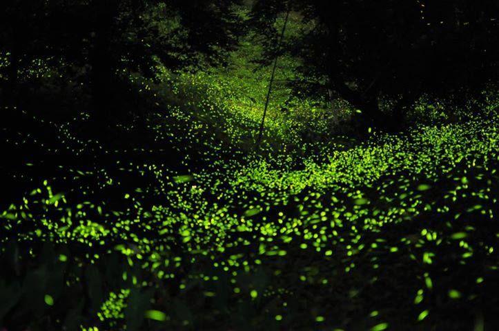 En Nanacamilpa, durante las noches de junio, julio y agosto se llenan con la magia de las luciérnagas. Una danza de luces se dispersa en 200 hectáreas...