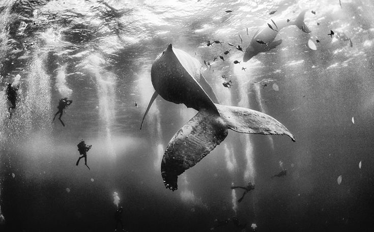 Winning image Whale Whispers. Photo: Anuar Patjane - National Geographic Traveler Photo Contest