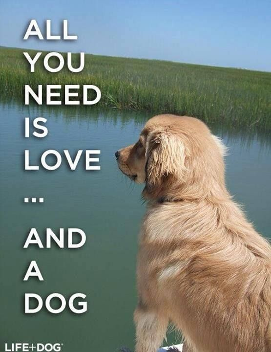 All you need is love…..And a dog!