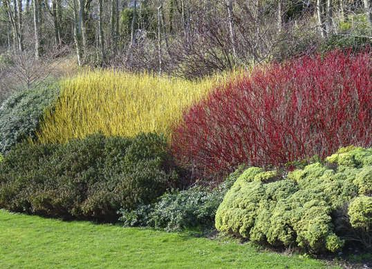 10 Fast-Growing Plants for (Almost) Instant Curb Appeal (Red Twig Dogwood)
