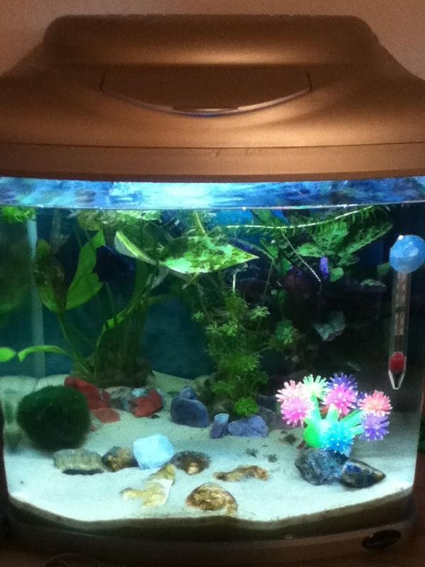 17 best images about something fishy on pinterest betta for Fish tank care