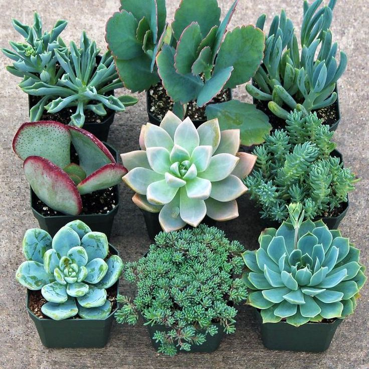 81 Best Fascinating Soft Succulents Images On Pinterest