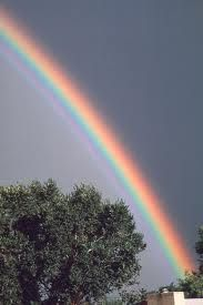 Rainbow - a spot of cheer on a rainy day. :)  #yogurt #competition #stapleton #smile