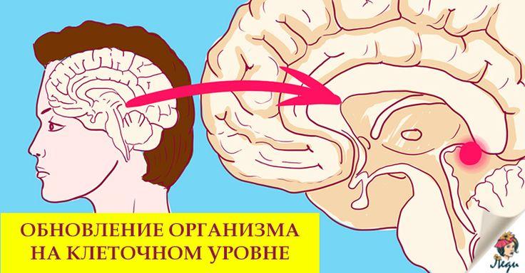 Мелатонин— регулятор суточных ритмов человека