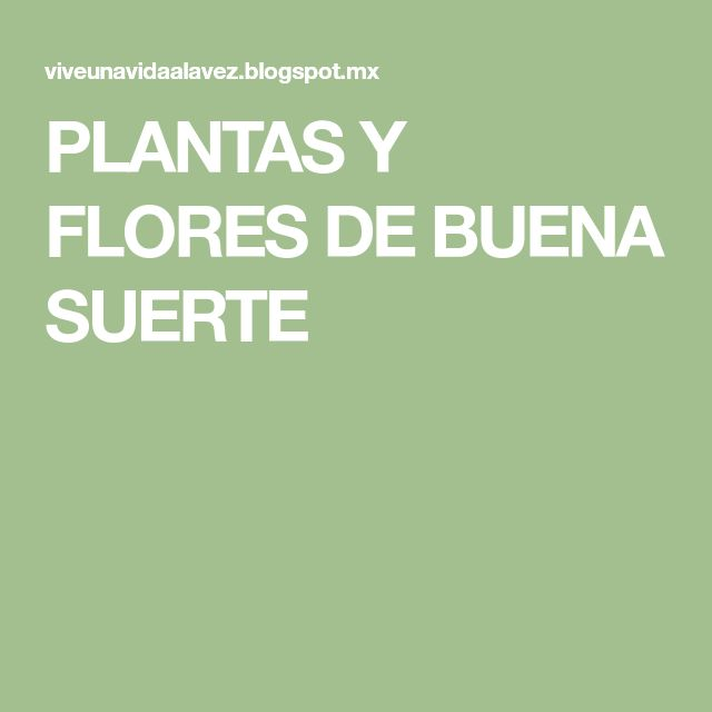 PLANTAS Y FLORES DE BUENA SUERTE