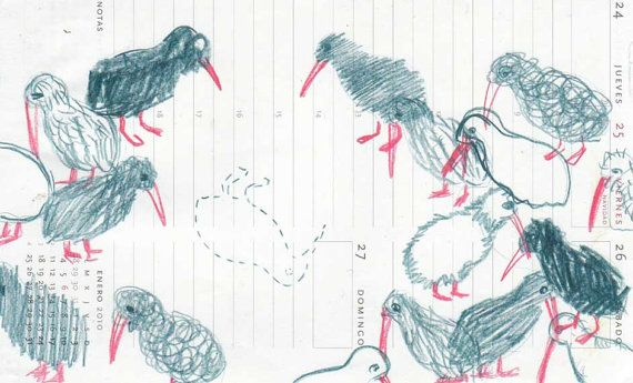 Kiwi Bird original drawing