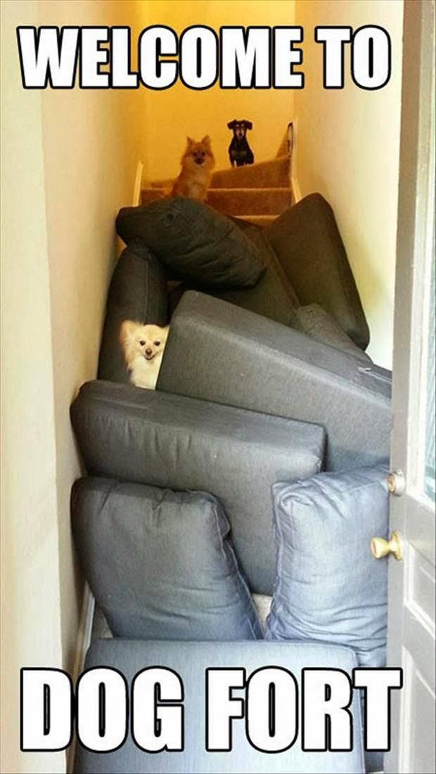 25 Unique Sofa Fort Ideas On Pinterest Awesome Forts