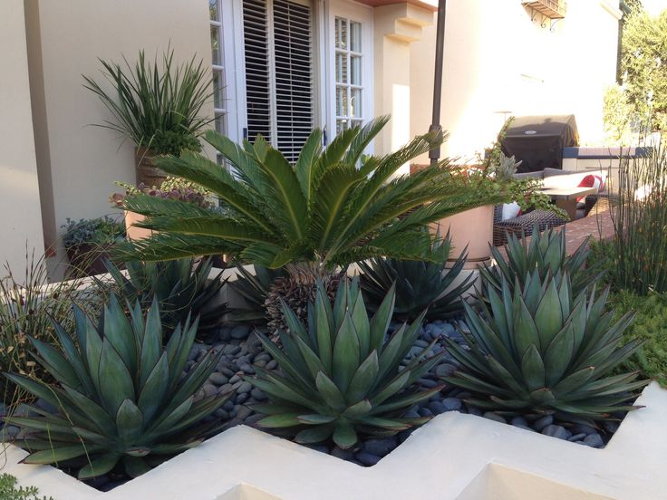 Newport Beach modern planter. Blue glow agave, sago palm, drought tolerant