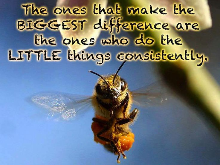Bee Quotes: 47 Best Bee & Quotes Images On Pinterest
