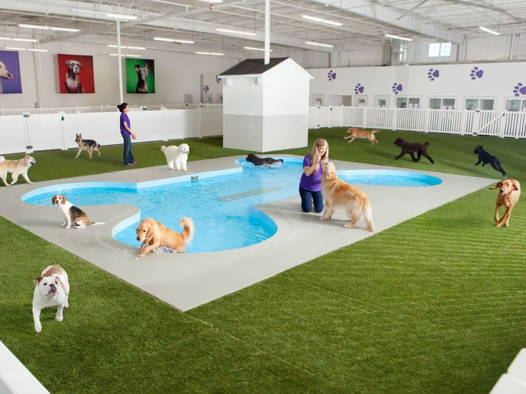 """New York's JFK Airport may have just welcomed a """"woof top"""" pet exercise area, but animals are set to get a terminal of their very own in the spring of 2016."""