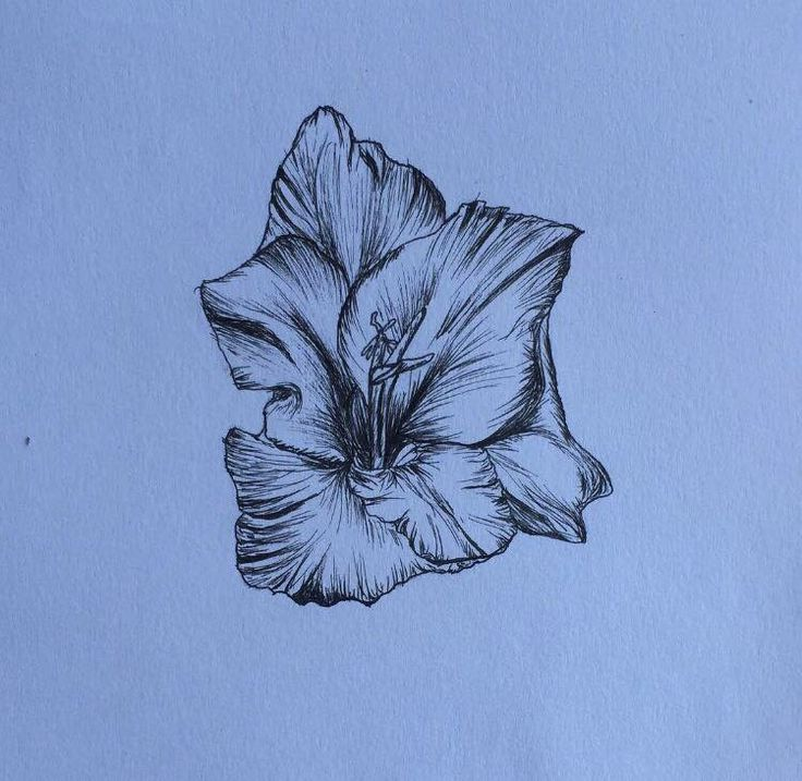 Gladiolus flower drawn in fine liner pen!