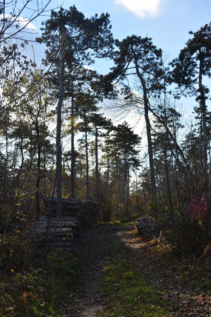 Autumn. Path.