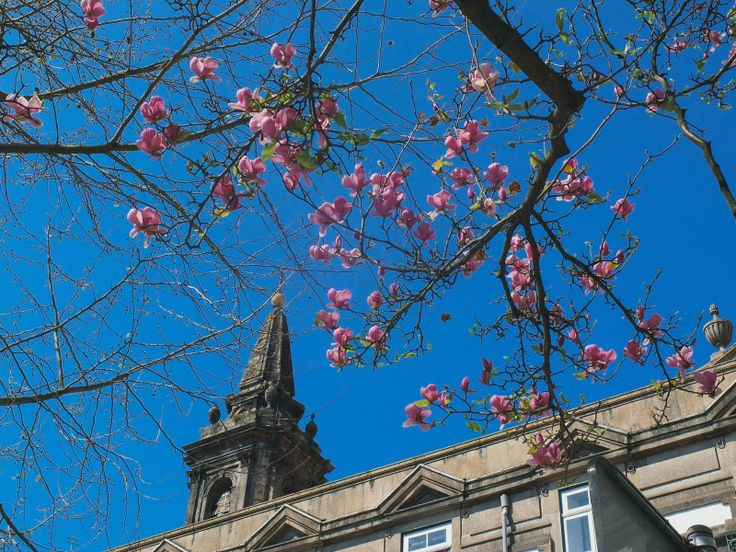 Недавно встречала раннюю весну в Порту. На неделю вперед есть картинки оттуда для постов. :) Early spring in Porto.  #travel #путешествие #porto #португалия #европа #sky #spring #весна