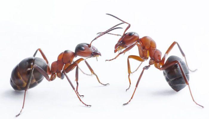 Como Acabar Con Las Hormigas En Mi Cocina Pin En Jardin Pequeno