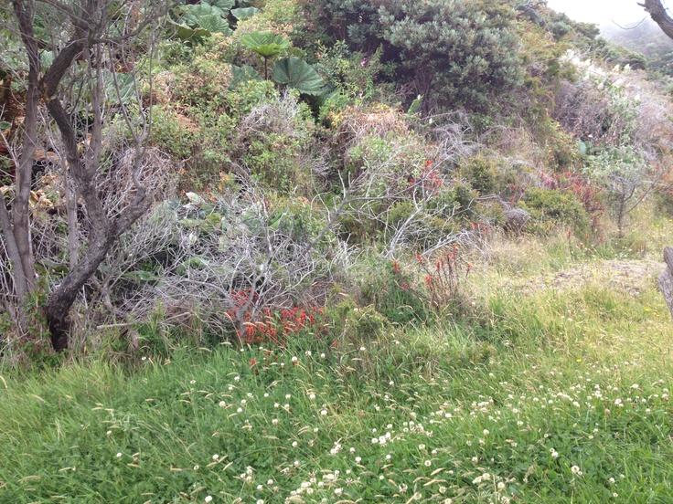 La vegetación del volcán Irazú
