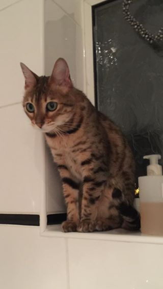 Hi everyone our small beloved cat has gone missing and if anyone has seen her or has any info, please please contact me. Her details: -Yellow Collar -Distinct tabby colouring -Big green eyes -Very timid -Last seen in Newmarket near Co-op -Chipped/Neutered Please look out for her and contact us at 07791406982 with any information.Read More
