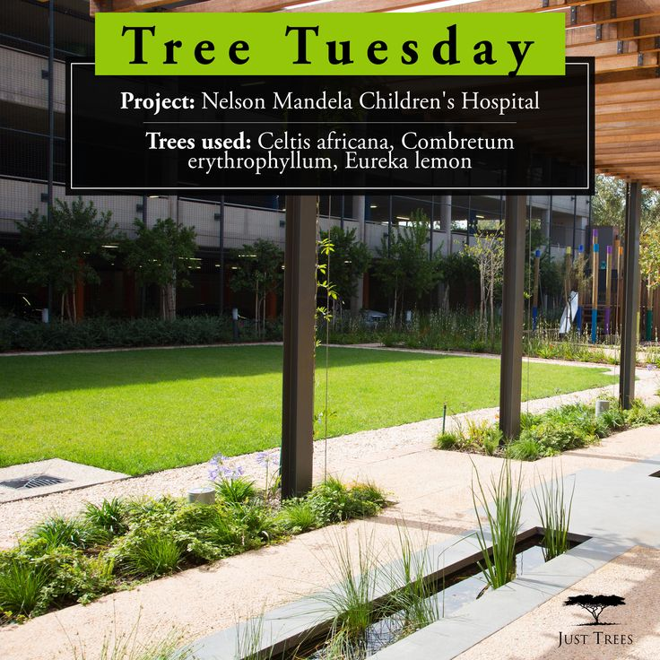 We're looking at the Nelson Mandela Children's Hospital in Johannesburg where the principles of therapeutic landscape design were implemented wonderfully. Trees from 40L to 1000L were planted in the Visitor Garden, Cafe Terrace and the Arrival Court. For their involvement in this project, Life Landscapes, a division of Life Green Group (Pty), were awarded The SALI Shield for Best overall project in 2017 as well as the Just Trees Trophy for Best Landscape Construction with Design by Others.