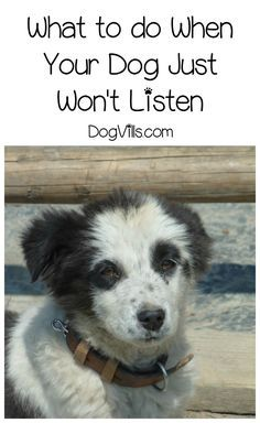 Wondering what to do if your dog won't listen? Check out our dog training tips to fix the breakdown in communication & keep Fido safe.