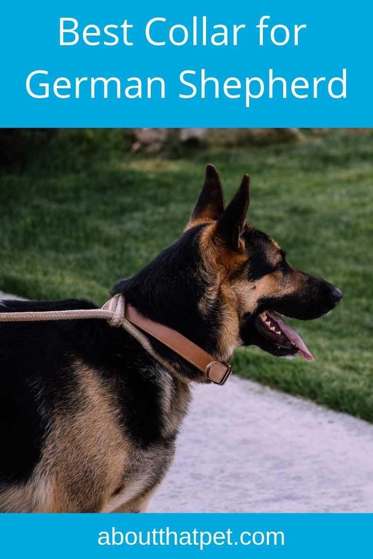 Best Collar For German Shepherd In 2020 German Shepherd Dog