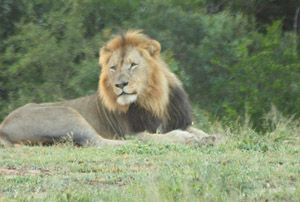 Hluhluwe Umfolozi Park, South Africa