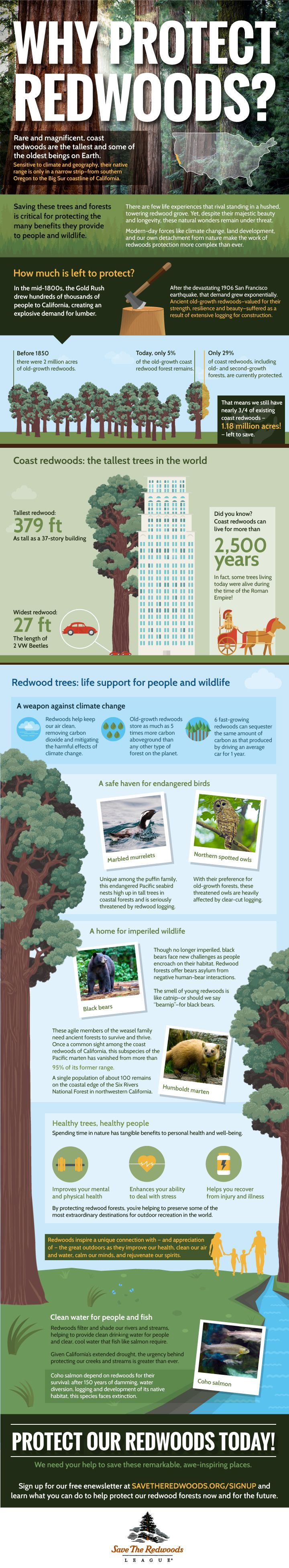 Happy Earth Day! We've created a new sky-high redwoods infographic for you to enjoy & share! http://www.savetheredwoods.org/blog/celebrate-earth-day-new-infographic/#utm_sguid=116638,bb27c241-a93c-9b3c-9ff8-5cb40fb01d53