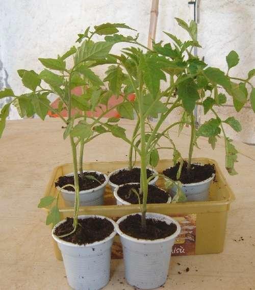 Calendario lunare delle semine del mese in corso - Coltivare l'orto