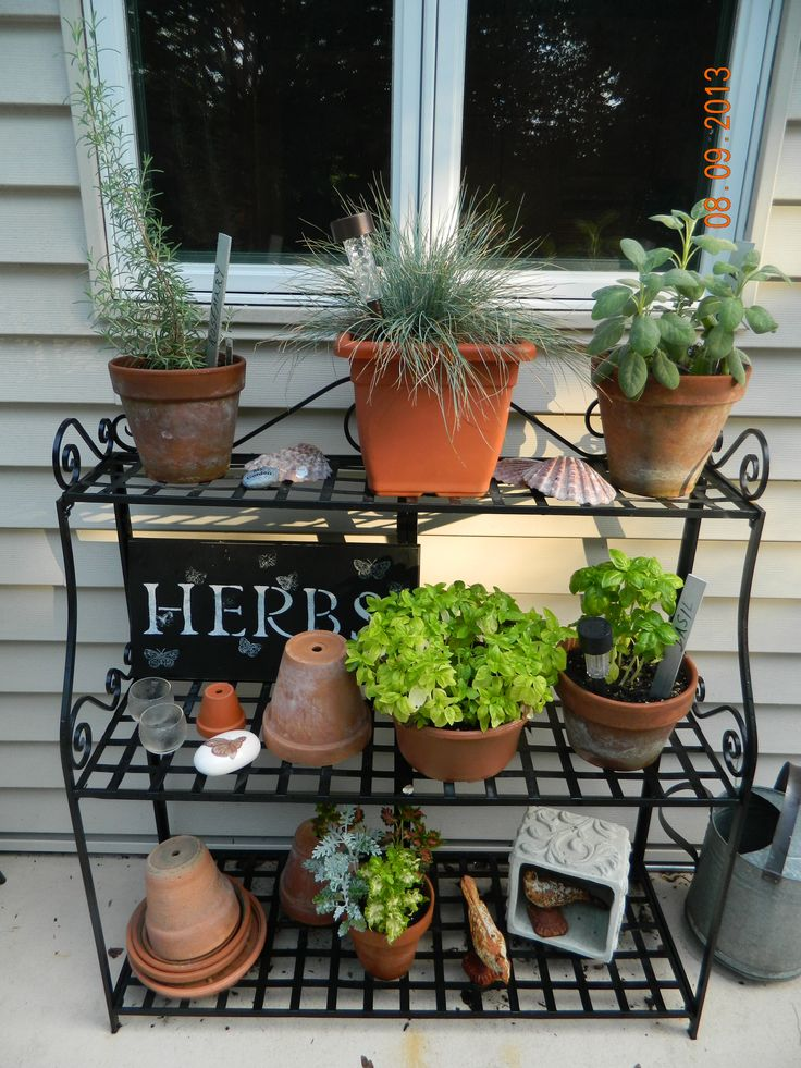 Herbs now at my window plant stand summer 2013 check out for Herb stand ideas
