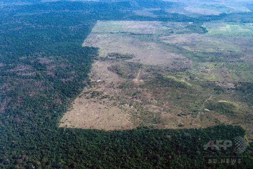 再生中の熱帯雨林はCO2を大量に吸収、研究