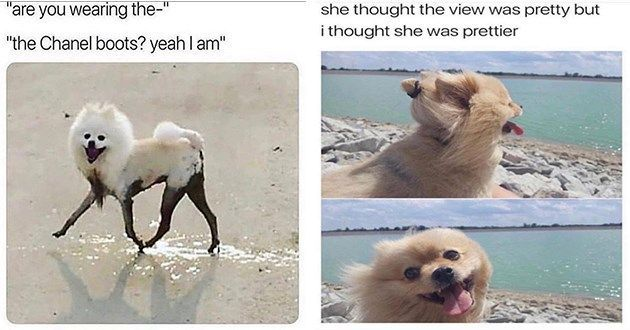 Tail Wagging Dog Memes Help Fill The Void Dog Memes Funny Animals Cute Funny Animals