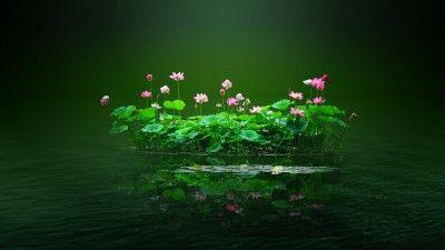 Lila virágok a vízben háttérkép képeslap
