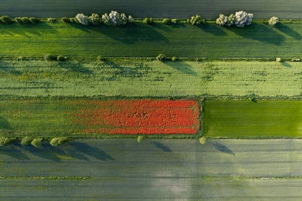 Kacper Kowalski new book Side Effects:  A view over fields of grain in Spring white chamomile, blue cornflower and other weeds growing among...