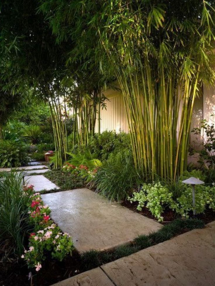 garden-paths_39.jpg Bamboo for height and quick growth