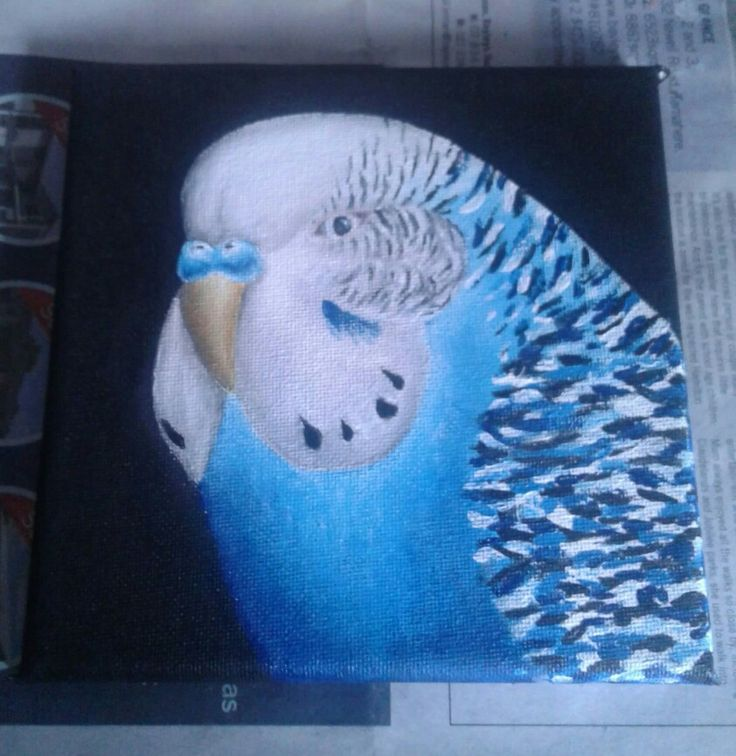 1st attempt at an acrylic budgie by Holly Loye