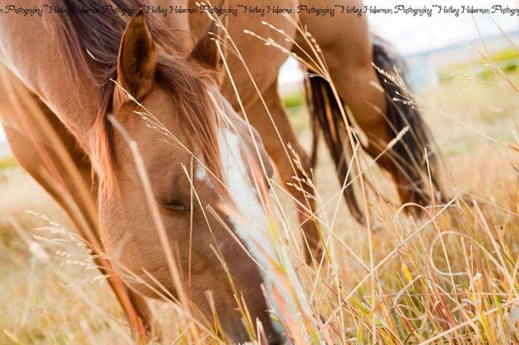 Hailey Haberman Photography: western