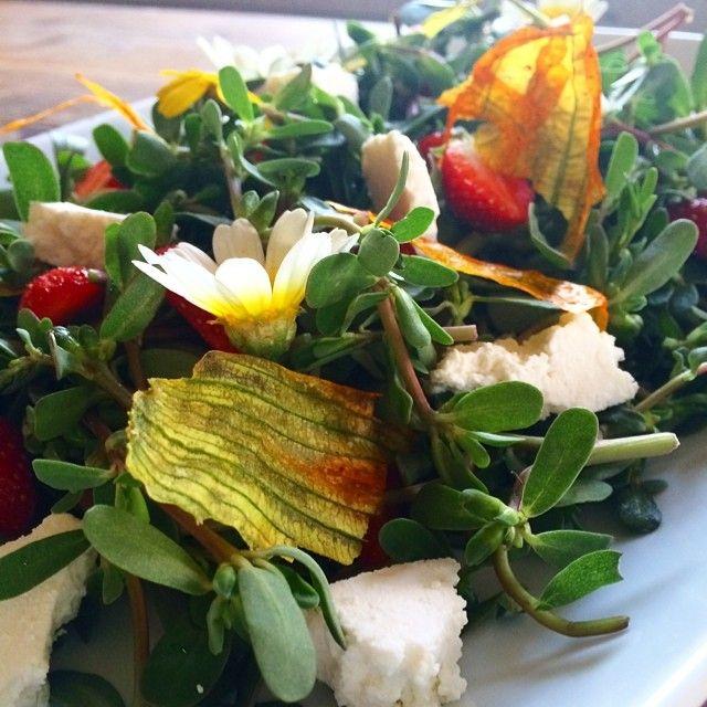 salad of fresh greens… with strawberries & crisp courget flowers…. @evbharat #alaçatı by #bytesizecatering @PınarAltunsoy