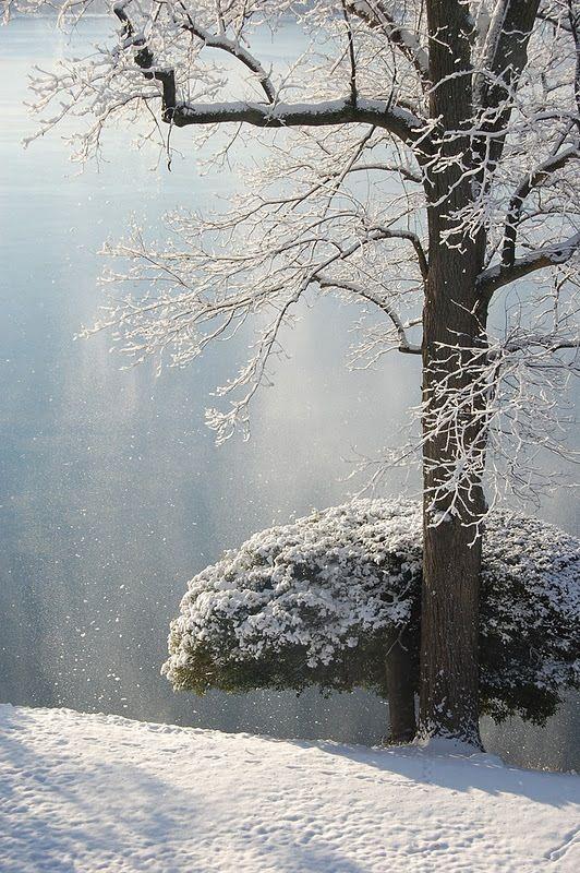 Winter Magic ... http://www.pinterest.com/pin/382946774539256644/
