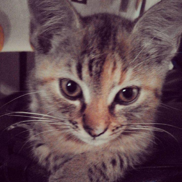 #kitty #kitten #cute #cateyes