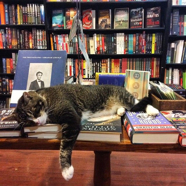 """""""15 Bookstore Cats You'll Want to Cuddle With""""  Every bookstore and library needs a resident feline."""