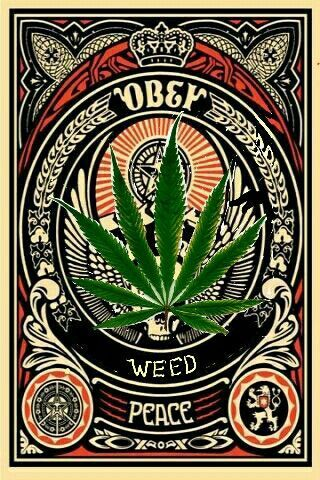Obey the power of weed! Discover edible cannabis that you make yourself! Make your own delicious Dragon Teeth mints or Cannabis chocolates; small candies you can take and use anytime, any place! MARIJUANA - Guide to Buying, Growing, Harvesting, and Making Medical Marijuana Oil and Delicious Candies to Treat Pain and Ailments by Mary Bendis, Second Edition. Just $2.99 for great e-book!  NOW FREE ON KINDLE UNLIMITED. www.muzzymemo.com