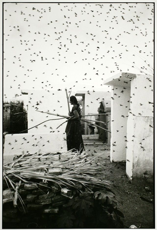 Graciela Iturbide: Cementerio (b.1942 Mexico). Influenced by Paul Strand other theosophists humanists.