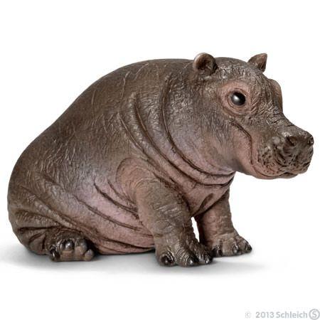 Jeune hippopotame 14682