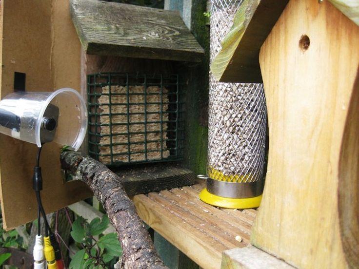 camera bird boxes