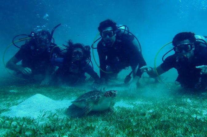 Thrilling snorkeling in #bolongobay #st.thomas  adventure at its peak.