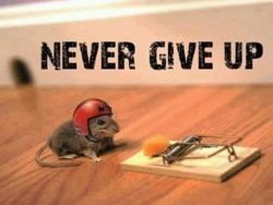 Never Give Up Funny Motivational Quote